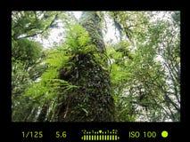 Sucherkamera mit Informationsanzeige Schöne grüne Landschaft Lizenzfreie Stockbilder