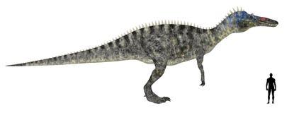 Suchomimus Size Comparison royalty free illustration