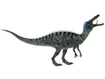 Suchomimus on White Stock Photo