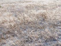 Suchy Śnieżny rośliny tło obrazy royalty free