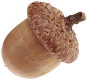 Jeden Acorn wycinanka Fotografia Stock