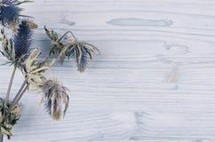 Suchy błękitny kwiat na lekkiej miękkiej błękitnej drewnianej desce Dekoracyjny wiosny tło z kopii przestrzenią, odgórny widok Obraz Stock