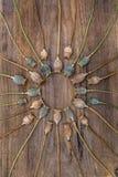 Suchy badyla maczek przewodzi lying on the beach na drewnianej desce i układającego w a zdjęcia royalty free