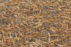Suchy bambus opuszcza obracać brown teksturę na ziemi Zdjęcia Royalty Free