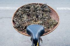 Suchy Chiński ziele Obraz Stock