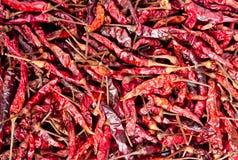 Suchy czerwonego chili pieprz Fotografia Stock