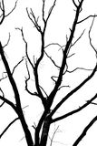 suchy dębowy drzewo Obrazy Royalty Free