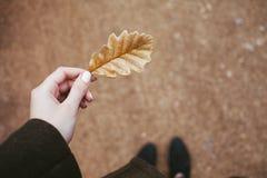 Suchy dębowy liść w ręce Obrazy Stock