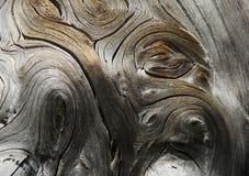 suchy drewno Obrazy Stock