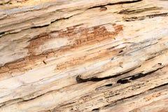Suchy drewno abstrakcjonistyczna tekstura obraz stock