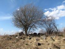 Suchy drewno otaczający kamieniami fotografia royalty free