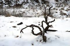 Suchy drewno w śniegu fotografia royalty free