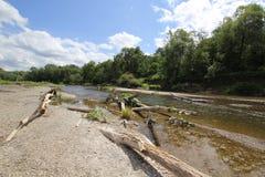 Suchy driftwood na brzeg rzeki Fotografia Royalty Free