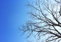 Suchy drzewa i niebieskiego nieba tło Zdjęcia Royalty Free