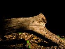 Suchy drzewny konar na ciemnym tle obraz royalty free