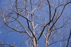 suchy drzewo Zdjęcia Royalty Free