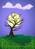 suchy drzewo Obraz Royalty Free