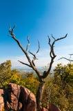 Suchy drzewo Obrazy Stock
