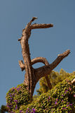 Suchy drzewo Zdjęcie Royalty Free