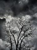 suchy drzewo Fotografia Royalty Free