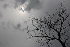 Suchy drzewo i chmurny niebo Obrazy Stock
