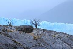 Suchy drzewo i duży lodowiec Obrazy Royalty Free