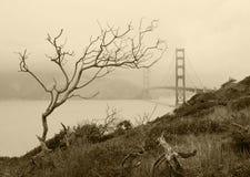 Suchy drzewo i Golden gate bridge, San Fransisco, Kalifornia, usa Fotografia Stock