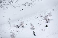 Suchy drzewo na śniegu zdjęcia stock