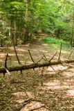 Suchy drzewo na drodze obraz stock