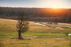 Suchy drzewo na polu zdjęcia royalty free