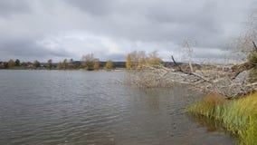 Suchy drzewo na rzece zdjęcia stock
