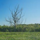 Suchy drzewo na zielonej łące zdjęcia stock
