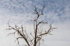 Suchy drzewo przeciw szaremu niebu Obrazy Royalty Free