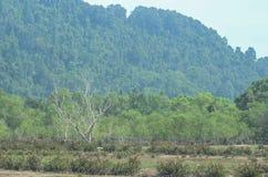 Suchy drzewo przy wioską obrazy royalty free