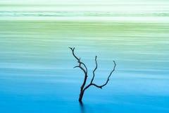 Suchy drzewo w jeziorze zdjęcia stock