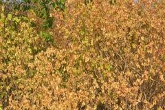 Suchy drzewo w lecie Obrazy Stock