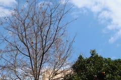 Suchy drzewo w niebieskim niebie zdjęcie royalty free