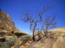 Suchy drzewo w skałach Zdjęcie Royalty Free