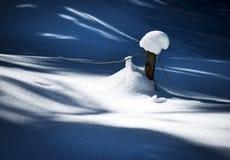 Suchy drzewo z śnieżną nakrętką obraz royalty free