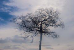 Suchy drzewo z nieba tłem zdjęcia stock