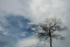 Suchy drzewo z nieba tłem obrazy stock