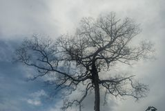 Suchy drzewo z nieba tłem zdjęcia royalty free