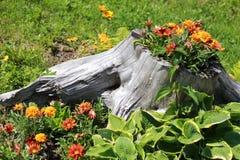 Suchy fiszorek z kwiatu dorośnięciem w nim fotografia stock