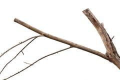 suchy gałąź drzewo fotografia stock