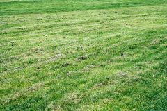 Suchy gazon w ogródzie fotografia stock