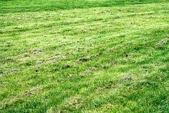 Suchy gazon w ogródzie obrazy royalty free