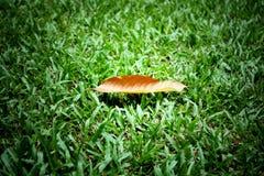 suchy gradientu zieleni liść Obrazy Royalty Free