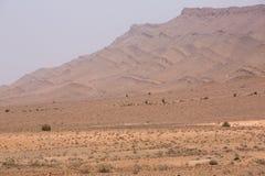 Suchy i gorący dzień w pustyni Sahara, Tata Zdjęcie Royalty Free
