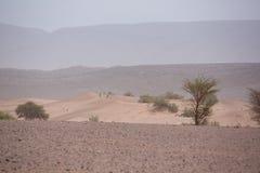 Suchy i gorący dzień w pustyni Sahara, Tata Obrazy Stock