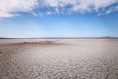 Suchy jezioro pod niebieskim niebem Zdjęcia Royalty Free